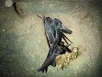 IMG_6542_nid_d_oiseaux_dans_une_grotte