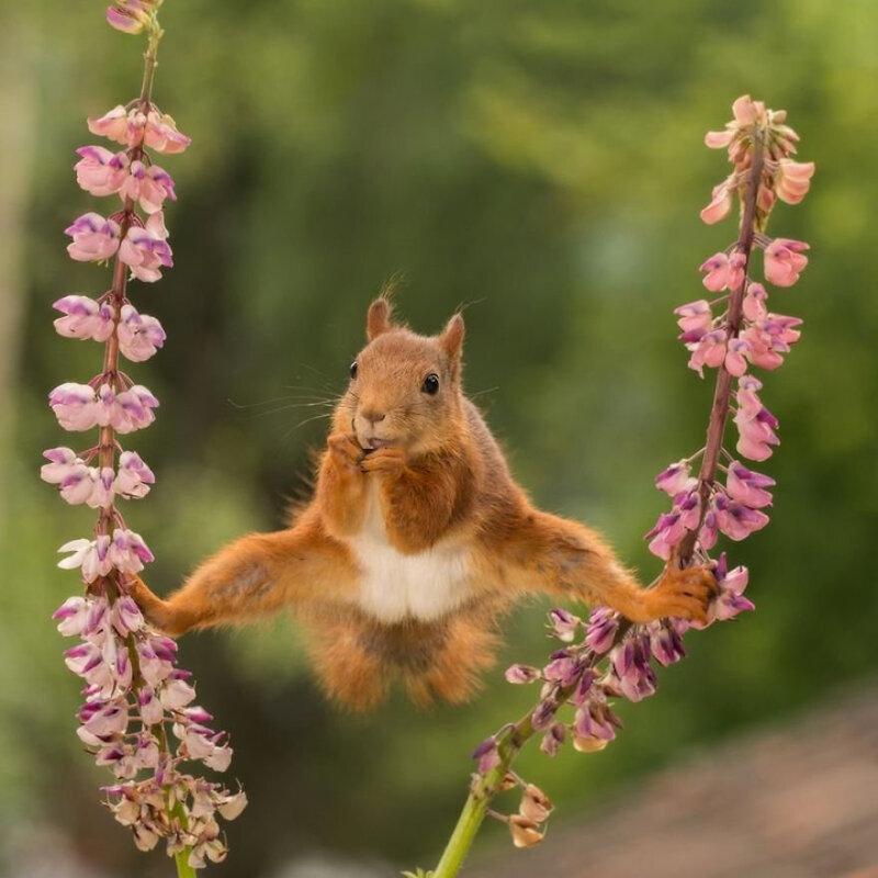wildlife-comedy-5