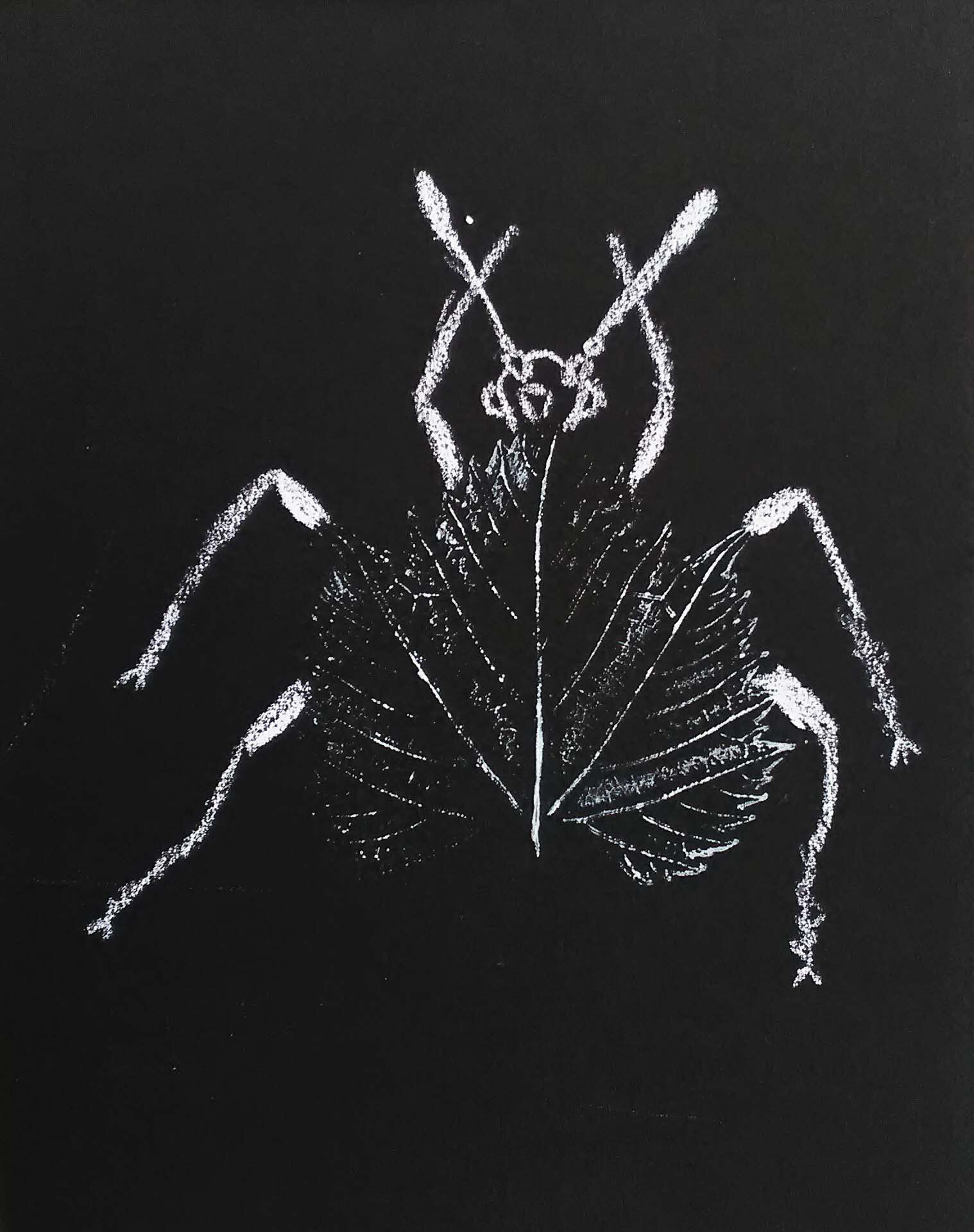 CassioInsect4