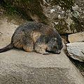05 Les Marmottes (12)