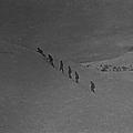 L'enigme du lac noir (the secret of convict lake) (1951) de michael gordon