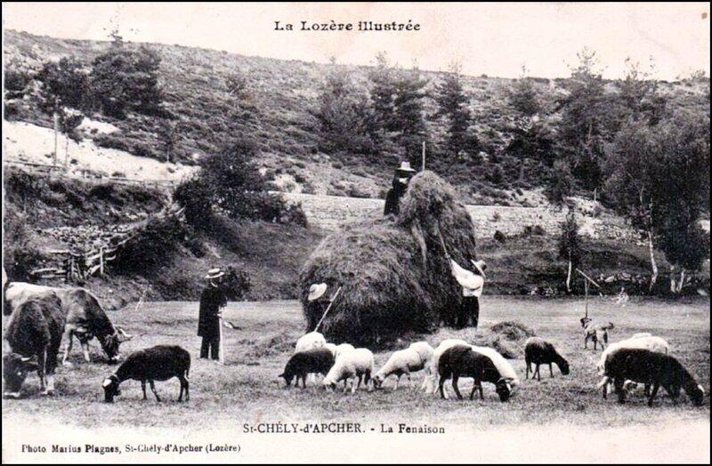 27-48-St Chély-Apcher-Fenaison-01-1
