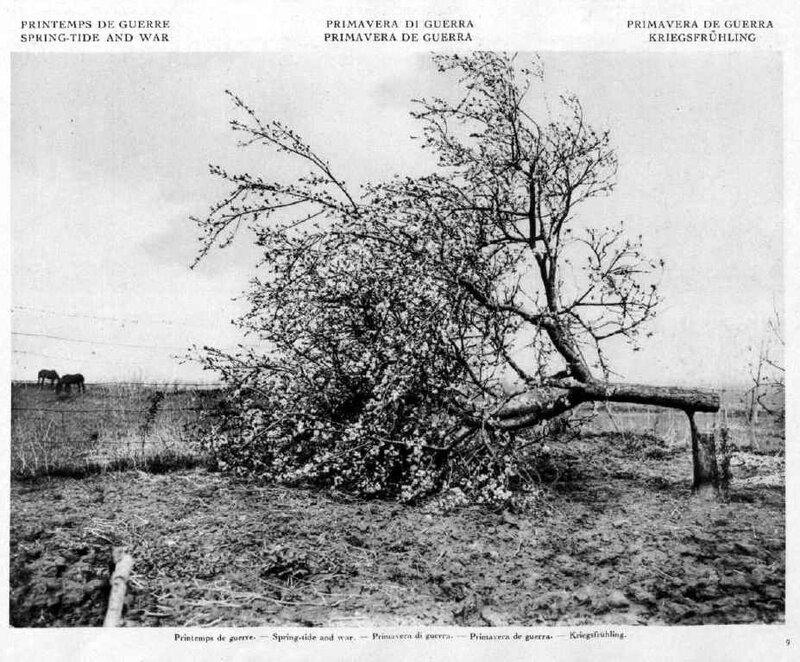 Veille 1917-51