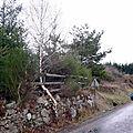 arbre_tokay
