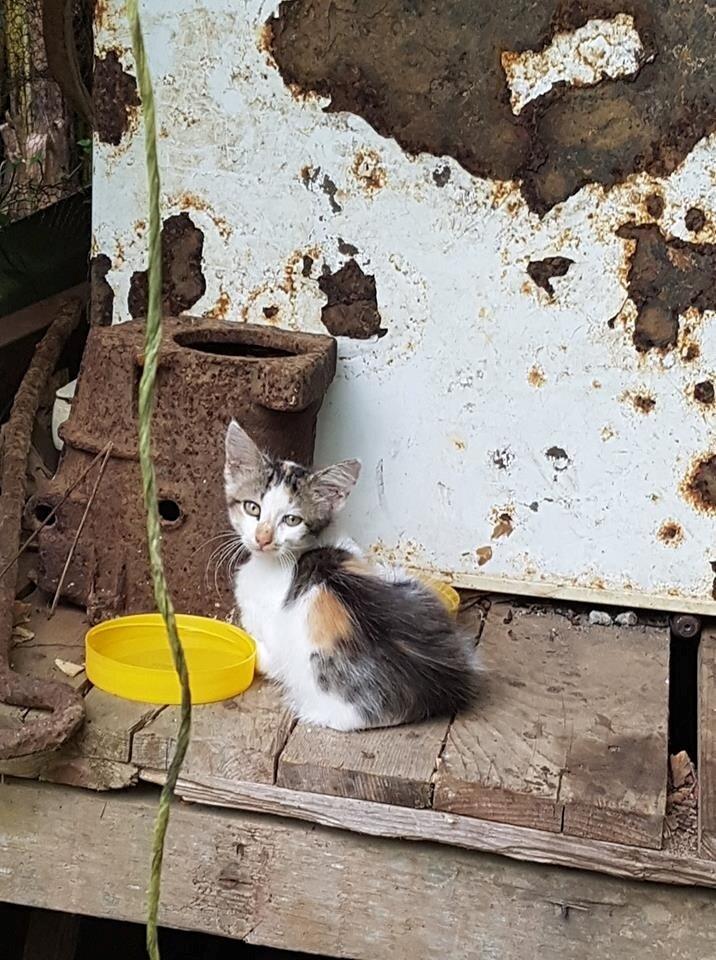 Petite chatte pic