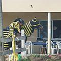 Jeux équestres manchots 2013 (192)