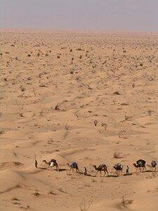 sahara2005_sahara_la_caravane