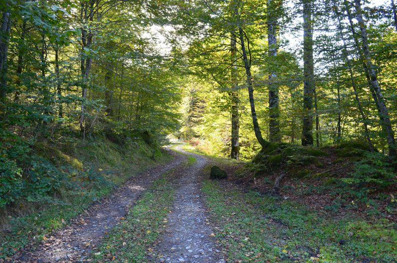 Chemin près des sources du Lourdios