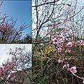 Arbres et arbustes au printemps