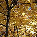 Haiku de l'automne (48)