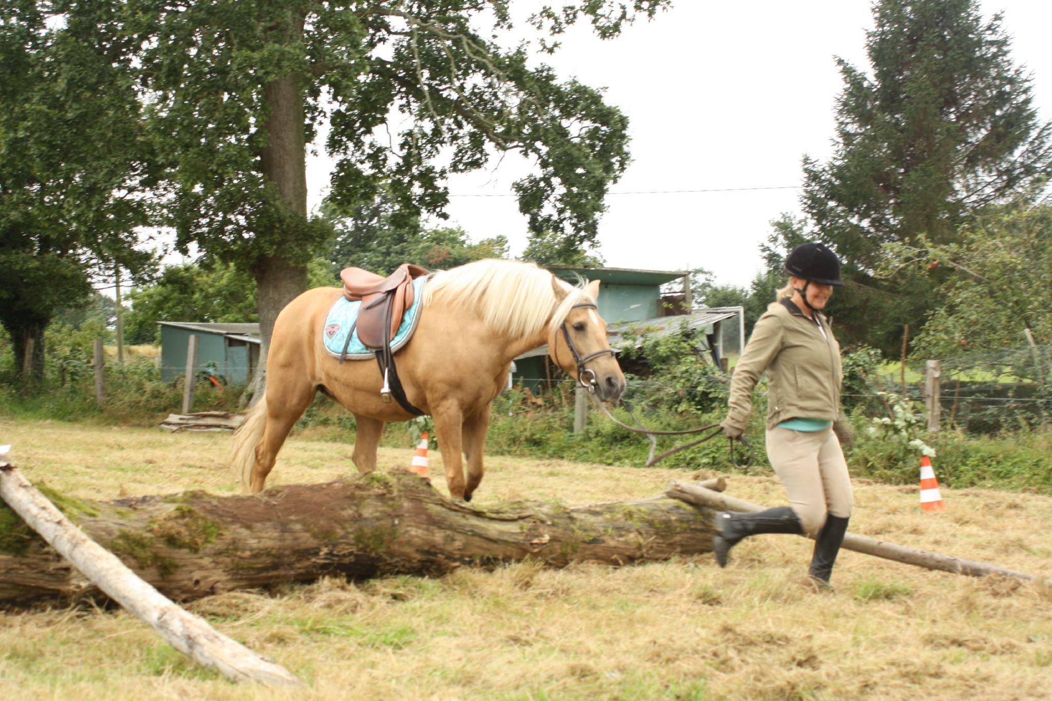 équitation de pleine nature - rallye équestre (91)