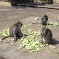 obviously monkeys do love cucumbers..