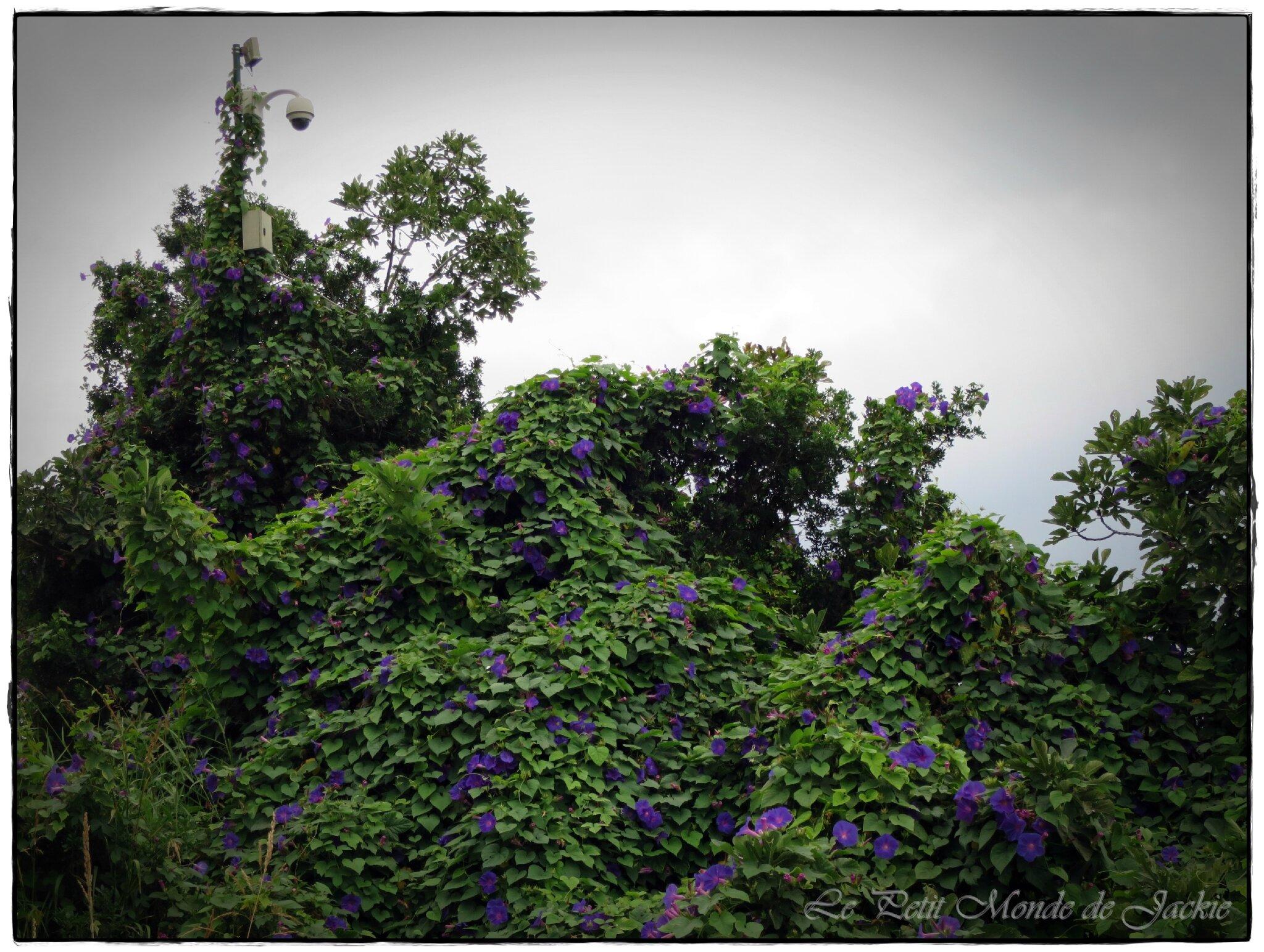 Reverbère fleuri