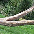 Jambes d'eucalyptus