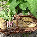 Légumes et fruits du jardin