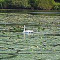 Balade au Lac 200916