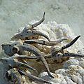 cranes d'antilope avant