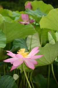 3 juillet Takamatsu Ritsurin 110