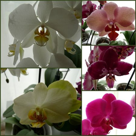 2013-06-10 - montage orchidées