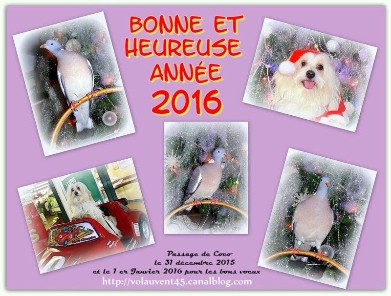 05 Bonne année 2016