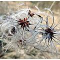 Végétation en hiver