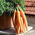 Mon velouté carottes /banane - 8 p