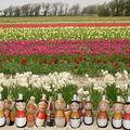 Terre de Bretagne et jolies fleurs
