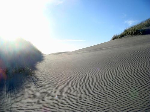 fossil point les dunes5