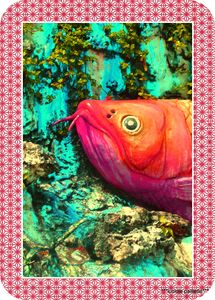 poisson_zoo__2_