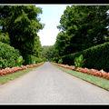2008-07-20 - WE 16 - Longwood Gardens 002