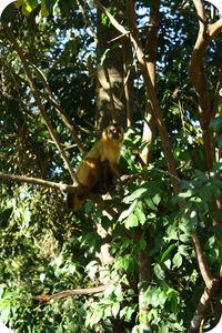 pantanal_chloe_016