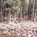 33_marae de Titiora près du belvédère