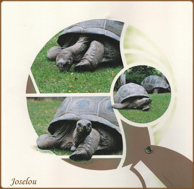 Les tortues 2
