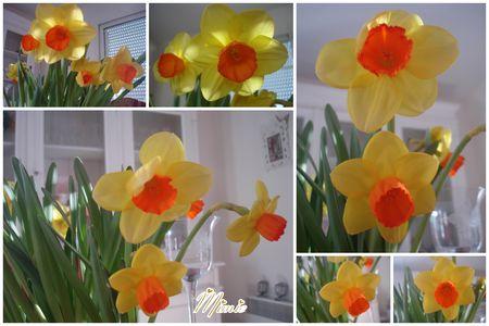 F_te_des_mamies_et_fleurs_maison1