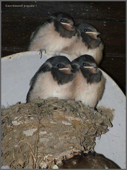 quatuor-bis
