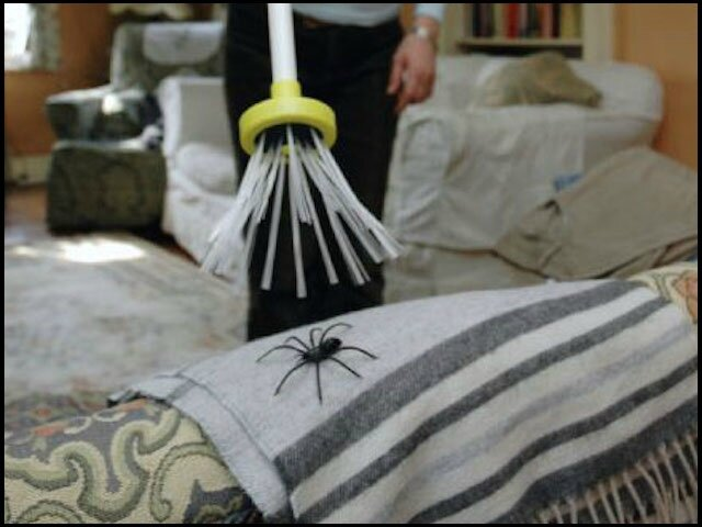coolgift spider catcher 1