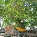 thailande0191