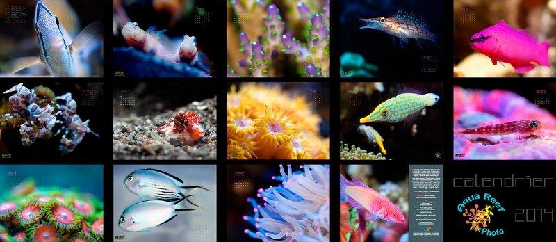 reeftales2014_demo