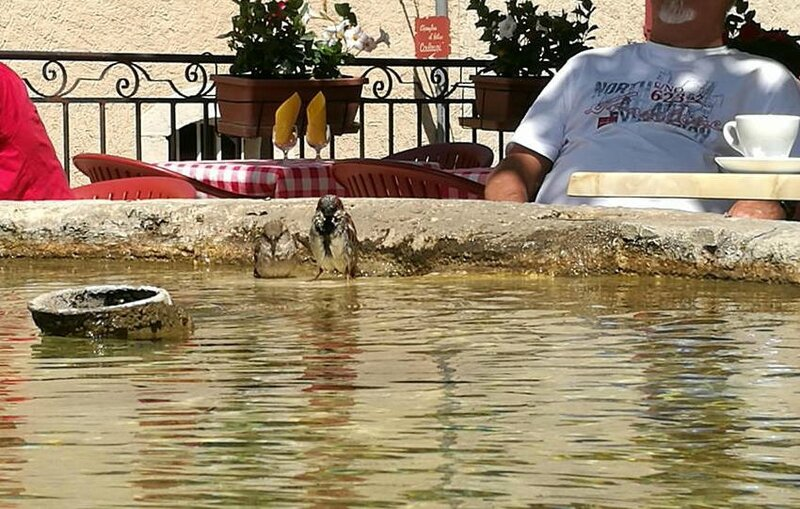 Aiguines, fontaine aux oiseaux (83)