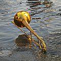 Trombone à l'eau