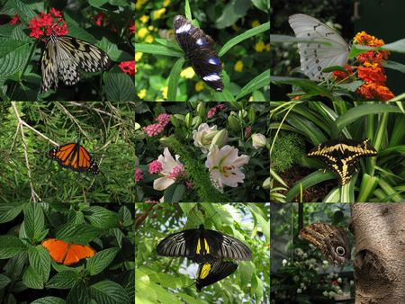 2009_04_16_papillons3