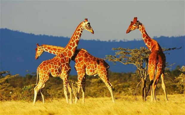 Safari Kanya