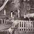 Auberge du Vieux Moulin-La Crèche 2