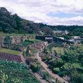 88 Inverere garden