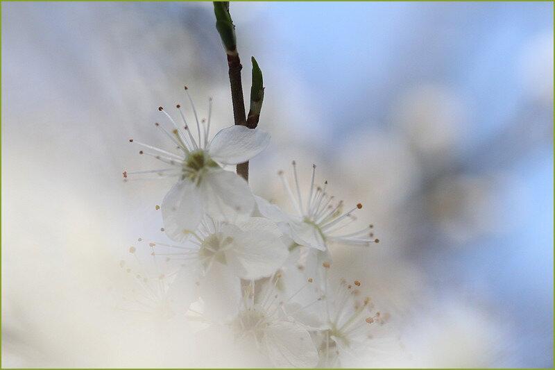 printemps chemin 16-03 126