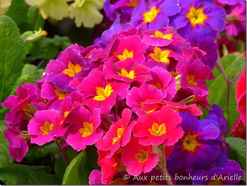 Fleurs de printemps (9)