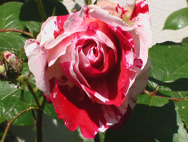 fleurs 058