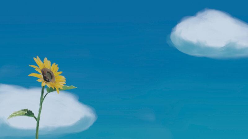tournesol et ciel bleu