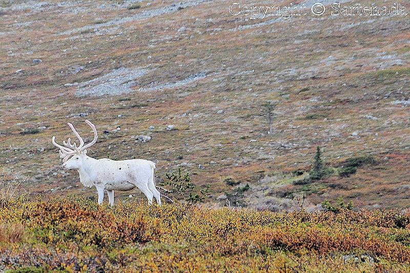 Pallas_Fell_Lapland_ (18)