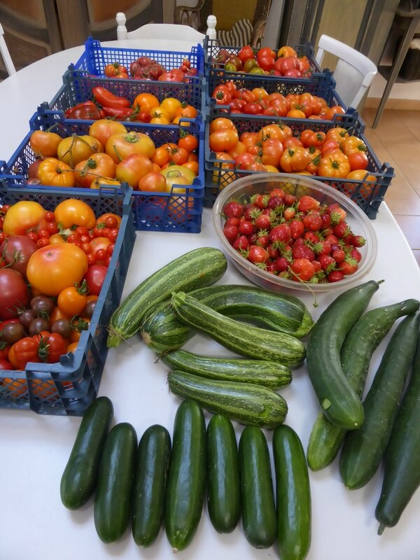11-tomates, courgettes, concombres (1)
